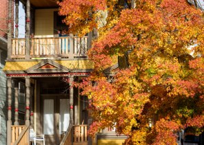 Fall colors in the leaves on a side street in NW Portland, Oregon.